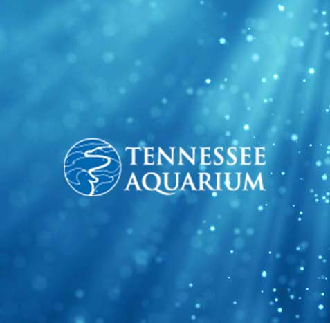 TN Aqua