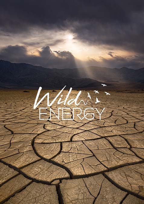 Wild Energy Web Design